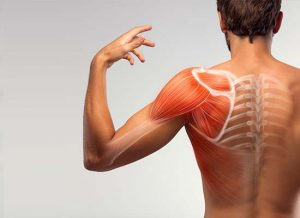 Shoulder Impingement Syndrome Conditions